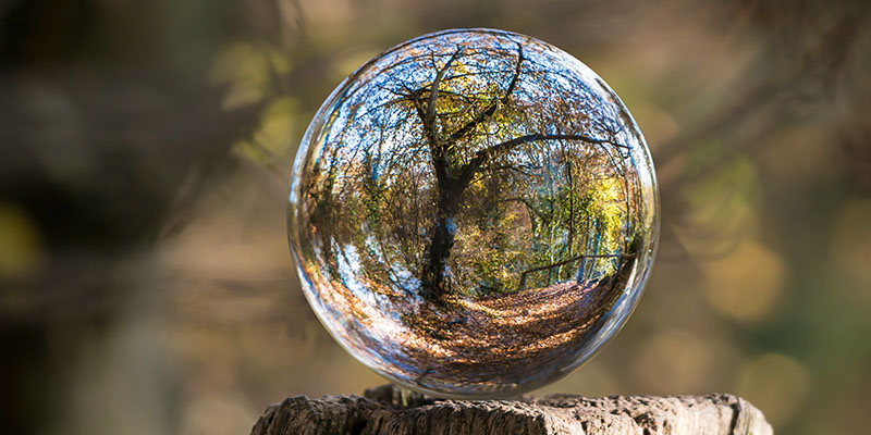 Дърво на живота в кристална топка
