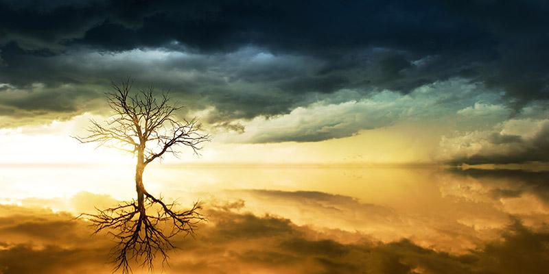 Дърво на живота абстракт