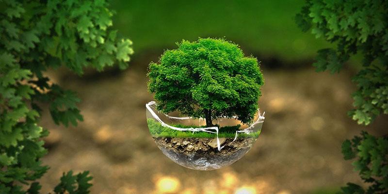 Зелено Дърво на Живота